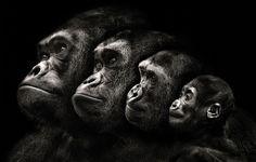 Una familia de simios. (Foto: Pedro Jarque Krebs/Caters News)