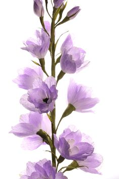 Crepe paper flower DELPHINIUM handmade and photographed by Papetal