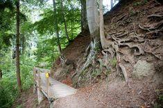 Freizeittipp: Wanderung von Meilen auf den Pfannenstiel – ZVV Plants, Shadows, Hiking, Tips, Planters, Plant, Planting