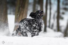 Fotografie Hunde | Fotografie & Kunst Petra Tänzer