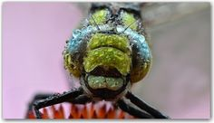 free desktop pictures dragonfly by Shirley Allford Desktop Pictures, Turtle, Animals, Inspiration, Free, Biblical Inspiration, Turtles, Animales, Animaux