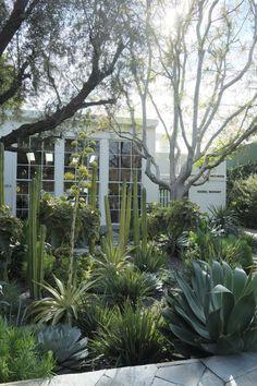 Vanessa Rudjord LA tips Dry Garden, Garden Plants, Home And Garden, Drought Tolerant Garden, Plant Box, Layout, Garden Spaces, Front Yard Landscaping, The Great Outdoors