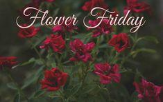 Flower Friday: Pumpkin Blossom - February 2nd Garden Photos, February, Friday, Pumpkin, Seasons, Flowers, Plants, Blog, Pumpkins