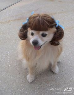 like my new hairstyle?