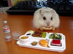 The mini Crystal Geyser bottle really made it. This miniature gourmet lunch for this very lucky hamster.