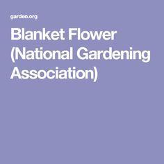 Blanket Flower (National Gardening Association)