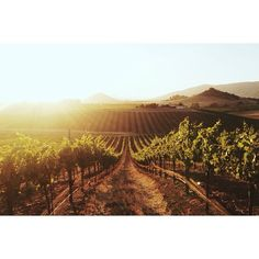 Wolff Vineyards in San Luis Obispo, California / photo by Kevin Russ