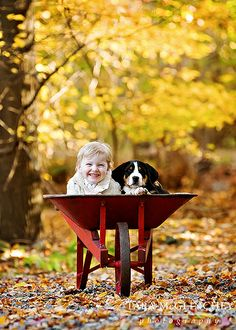 Wheelbarrow full of cuteness! #Autumn #Puppy #Child