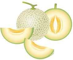Cantaloupe Melon PNG Clipart