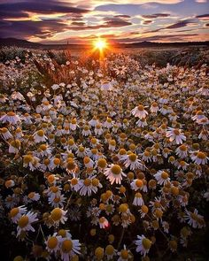Patagonia in bloom Beautiful Flowers Wallpapers, Pretty Wallpapers, Flowers Nature, Wild Flowers, Nature Pictures, Pretty Pictures, Mother Nature, Nature Photography, Scenery