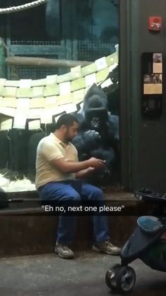 "Dude was showing the gorilla pictures of female gorillas and he for real is like ""next one please"" funny pictures Animal Humour, Funny Animal Memes, Funny Animal Videos, Cute Funny Animals, Funny Animal Pictures, Cute Baby Animals, Funny Cute, Funny Memes, Hilarious"