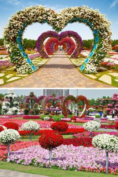 Dubai Miracle Garden! See out list of the top 10 things to do in Dubai on Avenly Lane Travel!