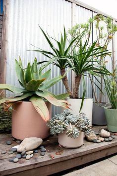 Colors. Shape. Form. Plants instead of flowers. source: LET IT BE