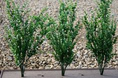 Artificial Boxwood Bush...looks real to me!