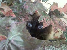 Mel brincando de esconde esconde