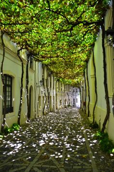 20 of the most beautiful streets in the world Jerez de la Frontera: Andalusia, Spain. Beautiful Streets, Beautiful World, Beautiful Places, Beautiful Gardens, Beautiful Pictures, Landscape Architecture, Landscape Design, Beautiful Architecture, Sustainable Architecture