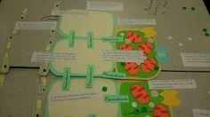 Imaginative Teaching Ideas: Using large models to teach complex ideas
