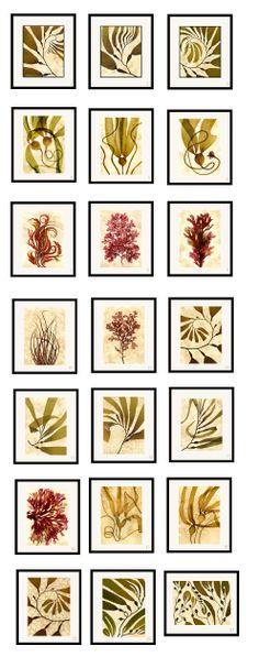 seaweed prints