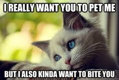 lol, All kittens and puppies are like this.