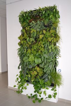 Green walls are so trendy! Plus they can help purify your indoor air. #airpur