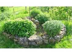 Build an Amazing Permaculture Herb Spiral in Your Backyard - Garden and Happy Permaculture Video, Herb Garden, Garden Paths, Herb Spiral, Vines, Potager Bio, Garden Cottage, Gardening, Garden Planning