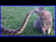 DOGS VS CATS! BEST Dog & Cat Fighting and Playing COMPILATION 2015! - YouTube