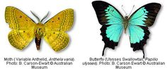 WHAT IS THE DIFFERENCE BETWEEN A MOTH AND A BUTTERFLY? |The Garden of Eaden