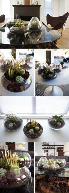 DIY Terrarium ideas--cactus planter for Cory? Terrarium Diy, Garden Plants, Indoor Plants, Air Plants, Cacti And Succulents, Cactus Plants, Succulent Planters, Cactus Flower, Hanging Planters
