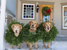 These wreaths are much cuter than mine!