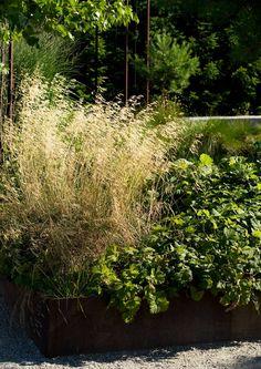 13 parasta heinäkasvia   Meillä kotona