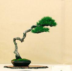 bonsai bunjin - Buscar con Google