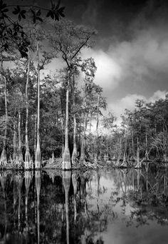 Cypress Creek 7 18×22