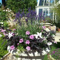 Hidcote lavender urn