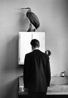 The Heron - André Kertész, 1969.