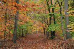 Rancocas State Park - Hainesport   Burlington County, NJ - Official Website