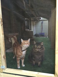 The thanks Catio, Fur Babies, Thankful, Animals, Animaux, Animal, Animales, Animais
