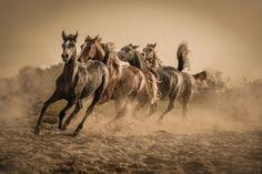 1X - Waseem AL-HAMMAD - Neueste Fotos