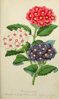 1858 - L'Horticulteur practicien; - Biodiversity Heritage Library