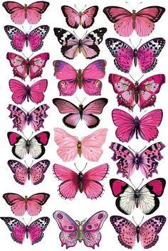 icu ~ Druckvorlage für die Deko-Schmetterlinge in 2019 Butterfly Painting, Butterfly Wallpaper, Pink Butterfly, Colorful Butterfly Drawing, Pink Drawing, Butterfly Outline, Simple Butterfly, Butterfly Quotes, Butterfly Baby Shower