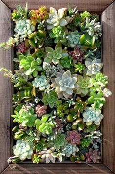 "What a great way to make a ""living picture"".    This great piece of art can be created using an old picture frame and a variety of succulents (which need minimal watering)."