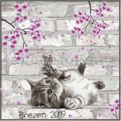 Březen 2019 Cats, Animals, Gatos, Animales, Animaux, Kitty, Cat, Cats And Kittens, Animal