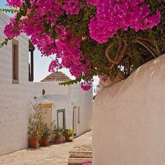 'Chora, Patmos, Dodecanese Islands' by Konstantinos Arvanitopoulos How Beautiful, Beautiful Flowers, Beautiful Places, Scenic Photography, Nature Photography, Bougainvillea Tree, Bonsai, Greece Islands, Plant Design