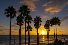 Palm Trees at Sunset in Oceanside - September 3, 2014 by Rich Cruse on 500px