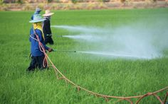 800 Million Pounds of Pesticides Can't be Washed Off, are Bred into our Food with GMO