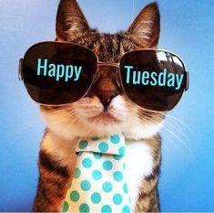 Cool Cat Happy Tuesday tuesday tuesday quotes happy tuesday tuesday images