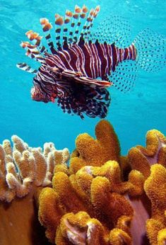 #Coralreef, #Maldives  Discover with #Steppes http://www.steppestravel.co.uk/destinations/indian+ocean/