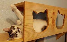 The Cat Carpenter - Austin, Texas