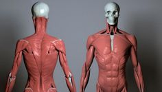 back neck anatomy sculpt - Google Search