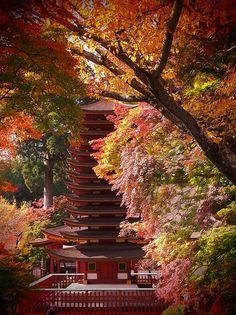Pagoda at Nara, Japan I miss this place. Love autumn ❤