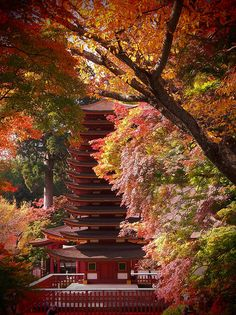 Pagoda at Nara, Japan I miss this place. Love autumn ❤